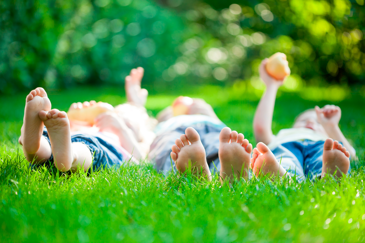 Charlotte NC | Lawn Care Services by Pine Valley Turf