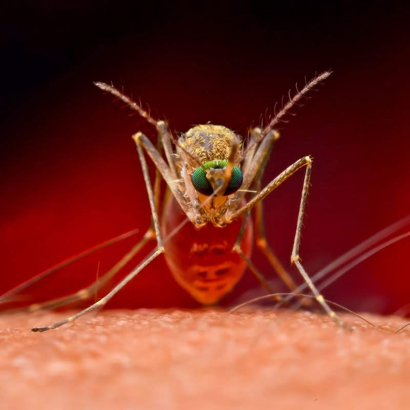 Mosquito Control Tips For Charlotte Homeowners