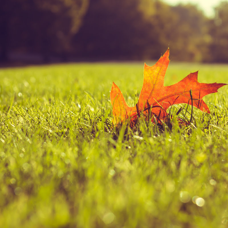 Fall Lawn Care: Set Your Lawn Up for Success