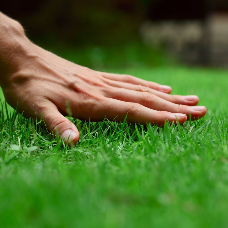 The Essential Spring Lawn Care Guide for North Carolina Lawns