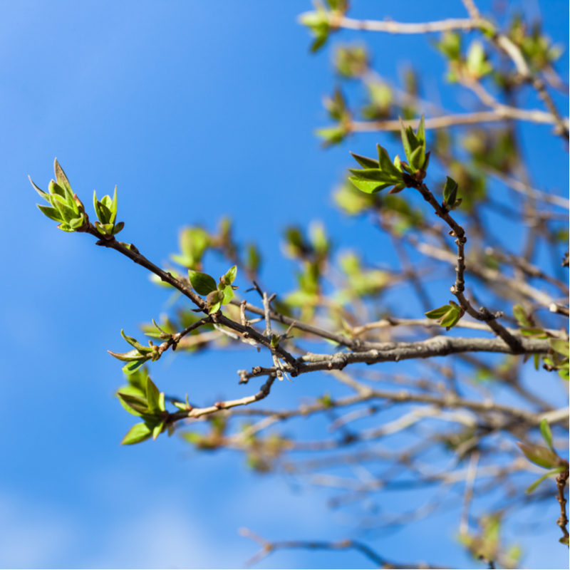 Top 3 Spring Tree Care Tips for Healthy North Carolina Trees