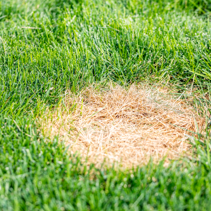 Summertime Lawn Care to Keep You and Your Turf Happy