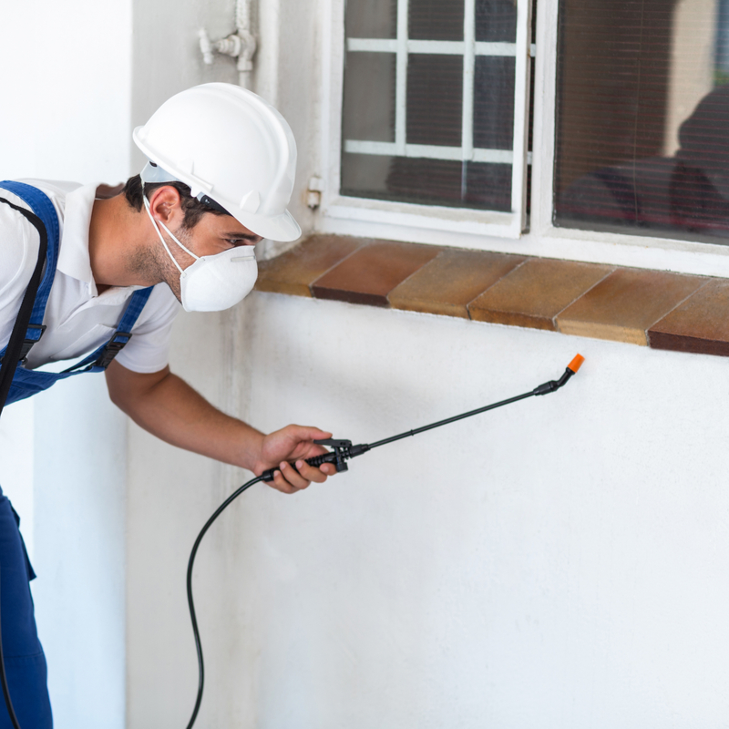 Best Methods for At-Home Exterior Pest Control