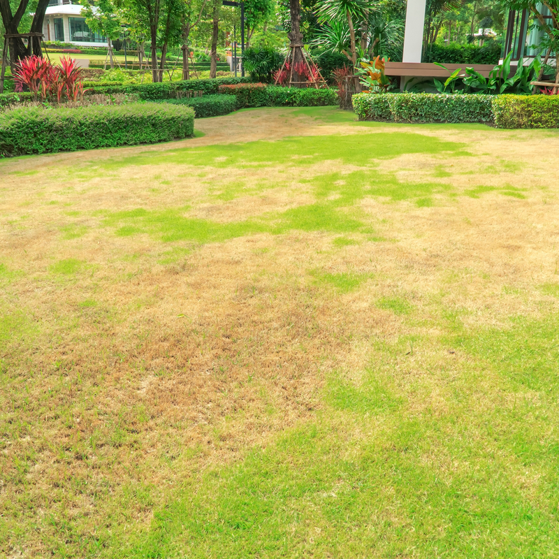 Ways to Prevent Brown Patch from Destroying Your North Carolina Lawn
