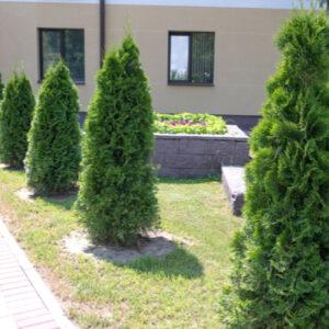 shrubs in a yard