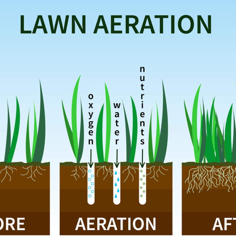 What to Know About Spring Aeration and When It's Right For You