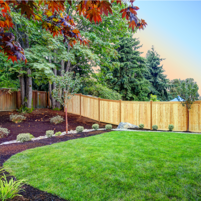 Trees That Make Your Summer Landscaping Pop